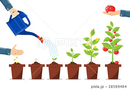 Growth of plant in pot, from sprout to vegetable. 38569464