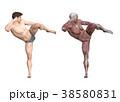 筋肉 解剖 3Dのイラスト 38580831