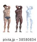 筋肉 解剖 3Dのイラスト 38580834
