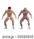 筋肉 解剖 3Dのイラスト 38580838