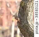 ジョウビタキ 小鳥 メスの写真 38583121