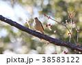 ジョウビタキ 小鳥 メスの写真 38583122