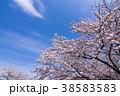 桜 青空 ソメイヨシノの写真 38583583
