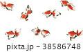 金魚 きんぎょ キンギョ 38586748