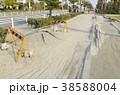 東日本大震災の被害 38588004