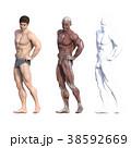 男性 解剖 筋肉 3DCG イラスト素材 38592669