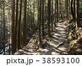 杉 木 森林の写真 38593100