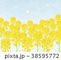 モンシロチョウ 春 菜の花畑のイラスト 38595772