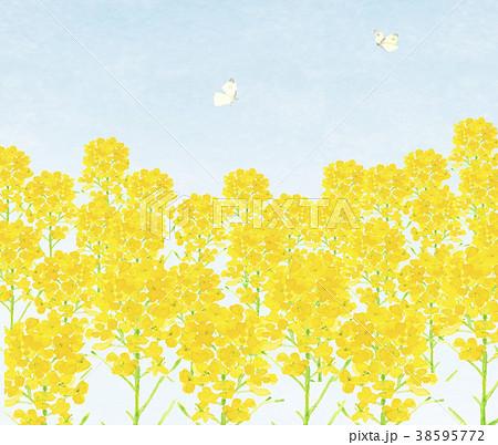 いちめんの菜の花とチョウチョと青空 38595772