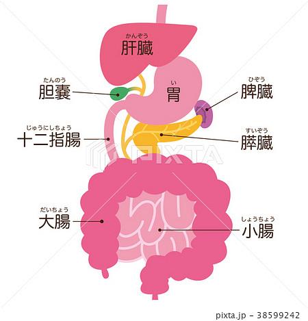 消化器系 脾臓 名称 38599242