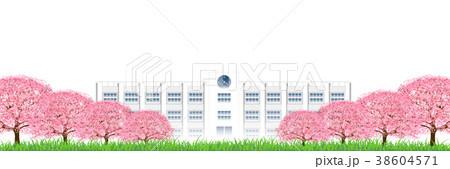 桜 春 花 背景  38604571