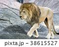 ライオン 38615527