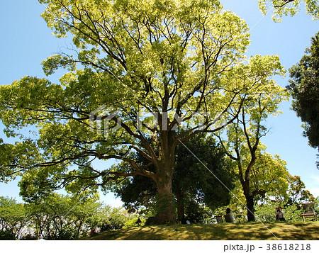 初夏の木陰 38618218