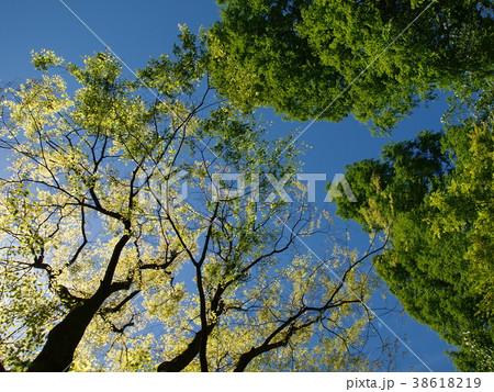 初夏の緑葉と青空 38618219