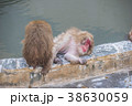 ニホンザル 温泉 猿の写真 38630059