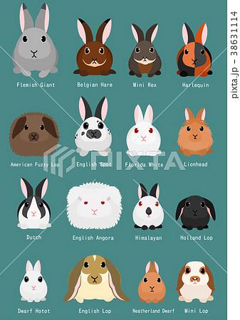 ウサギ 種類 一覧