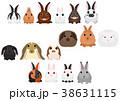 ベクター 動物 ウサギのイラスト 38631115
