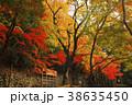 永源寺 臨済宗 紅葉の写真 38635450