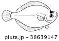 かれい 塗り絵 魚のイラスト 38639147