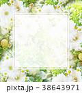 背景-花-フレーム 38643971