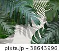 葉 植物 白壁のイラスト 38643996