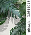葉 植物 白壁のイラスト 38644013