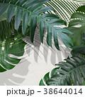 葉 植物 白壁のイラスト 38644014