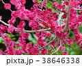 湯島天満宮の梅まつり 38646338