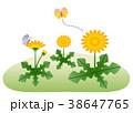 タンポポ 春のイメージ 38647765