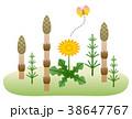 つくしとタンポポ 春のイメージ 38647767