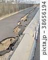 東日本大震災の被害 38656194