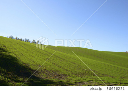 秋の美瑛の丘 38656221