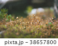Closeup of Green Moss in Autumn Forest. 38657800