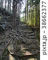 【熊野古道】松本峠 38662377