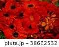 赤い花、ガーベラ 38662532