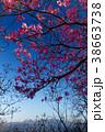宇都宮森林公園・古賀志山のアカヤシオツツジと日光連山の眺め 38663738