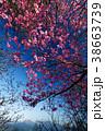 宇都宮森林公園・古賀志山のアカヤシオツツジと日光連山の眺め 38663739