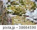 岩に生える苔 38664590