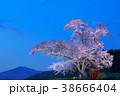 桜 小沢の桜 空の写真 38666404