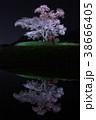 桜 小沢の桜 ライトアップの写真 38666405