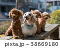 犬 戌 散歩の写真 38669180