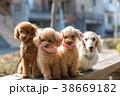 犬 戌 散歩の写真 38669182