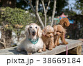 愛犬の散歩 38669184