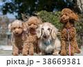 犬 戌 散歩の写真 38669381