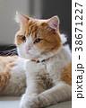 Cat with animal portrait. 38671227