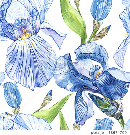 Flowers of Iris. Watercolor hand drawn botanical 38674709