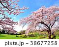 桜 花 ソメイヨシノの写真 38677258
