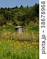 小屋 菜の花 池の写真 38678968
