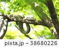 新緑の中の二匹の蛇 38680226