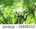 新緑の中の二匹の蛇 38680253
